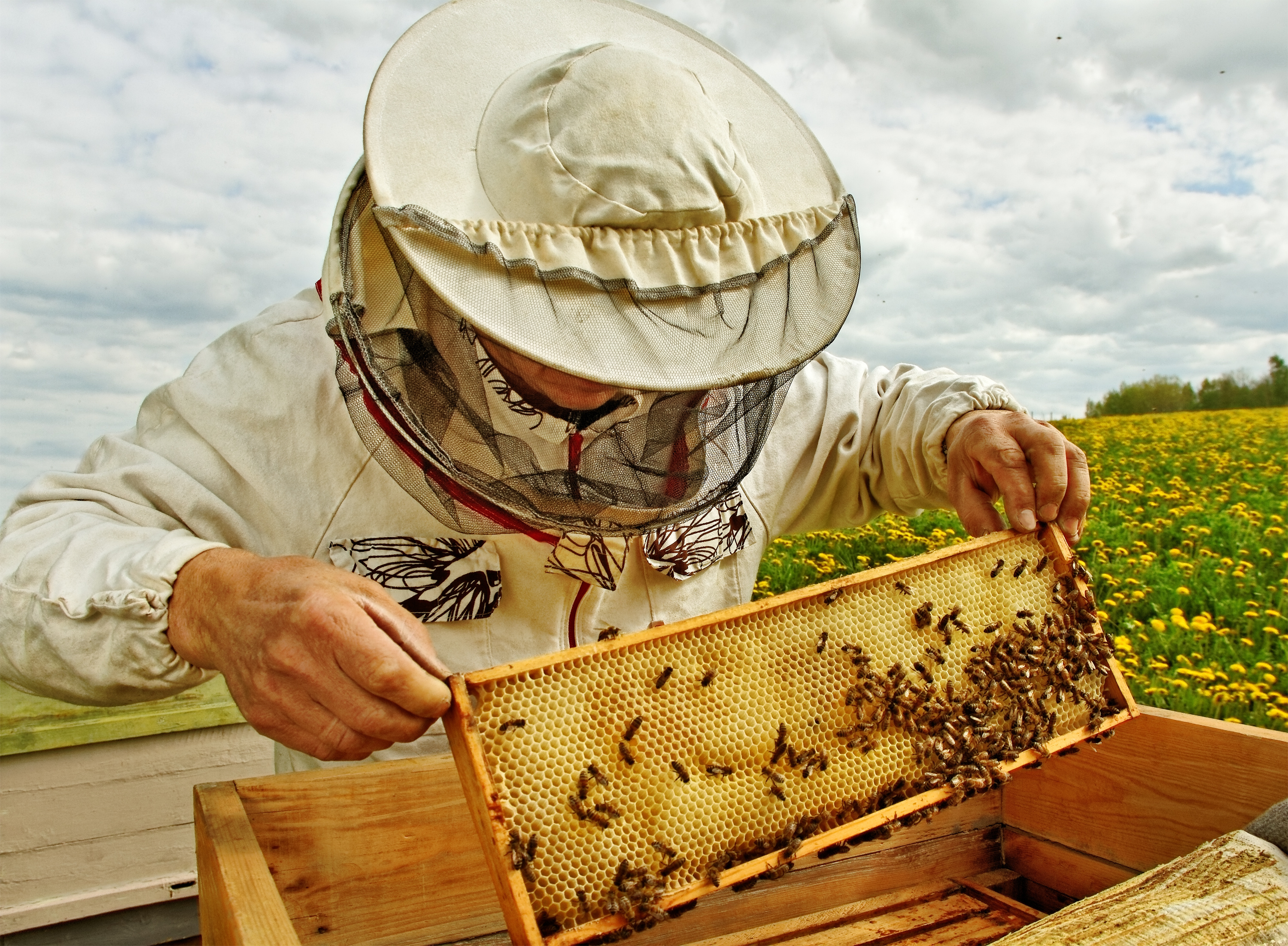 ApisProtect: Helping Beekeepers Prevent Losses and Increase Productivity in Their Hives