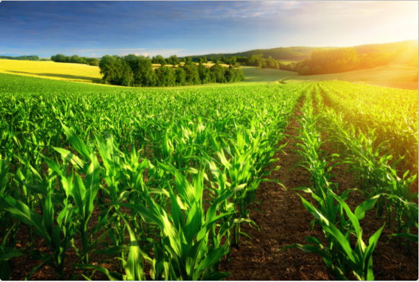 Agrible: Bringing Predictive Analytics to the Farm