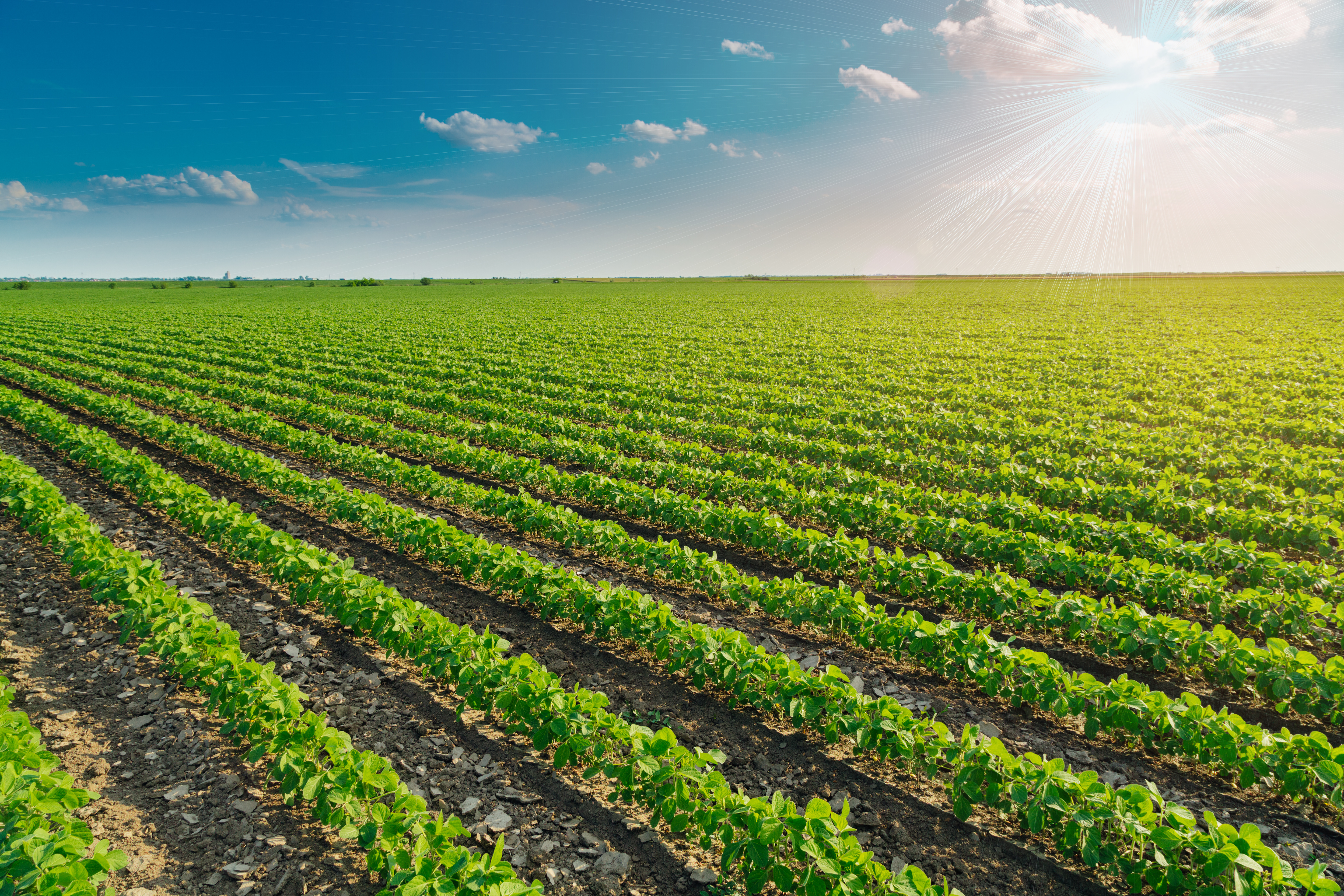Conservis: Meeting the Global Demand for Agriculture