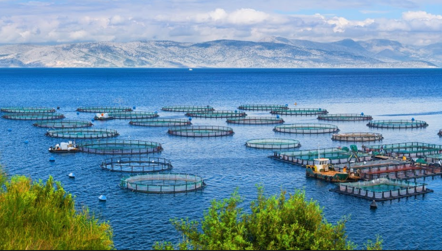 Catalina Sea Ranch: How Aquaculture Is Going to Revolutionize the Agriculture & Food Industries