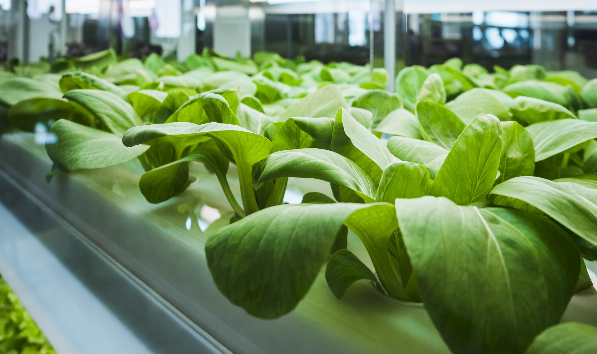 AeroFarms: Scaling Indoor Farming With New Smart Technologies