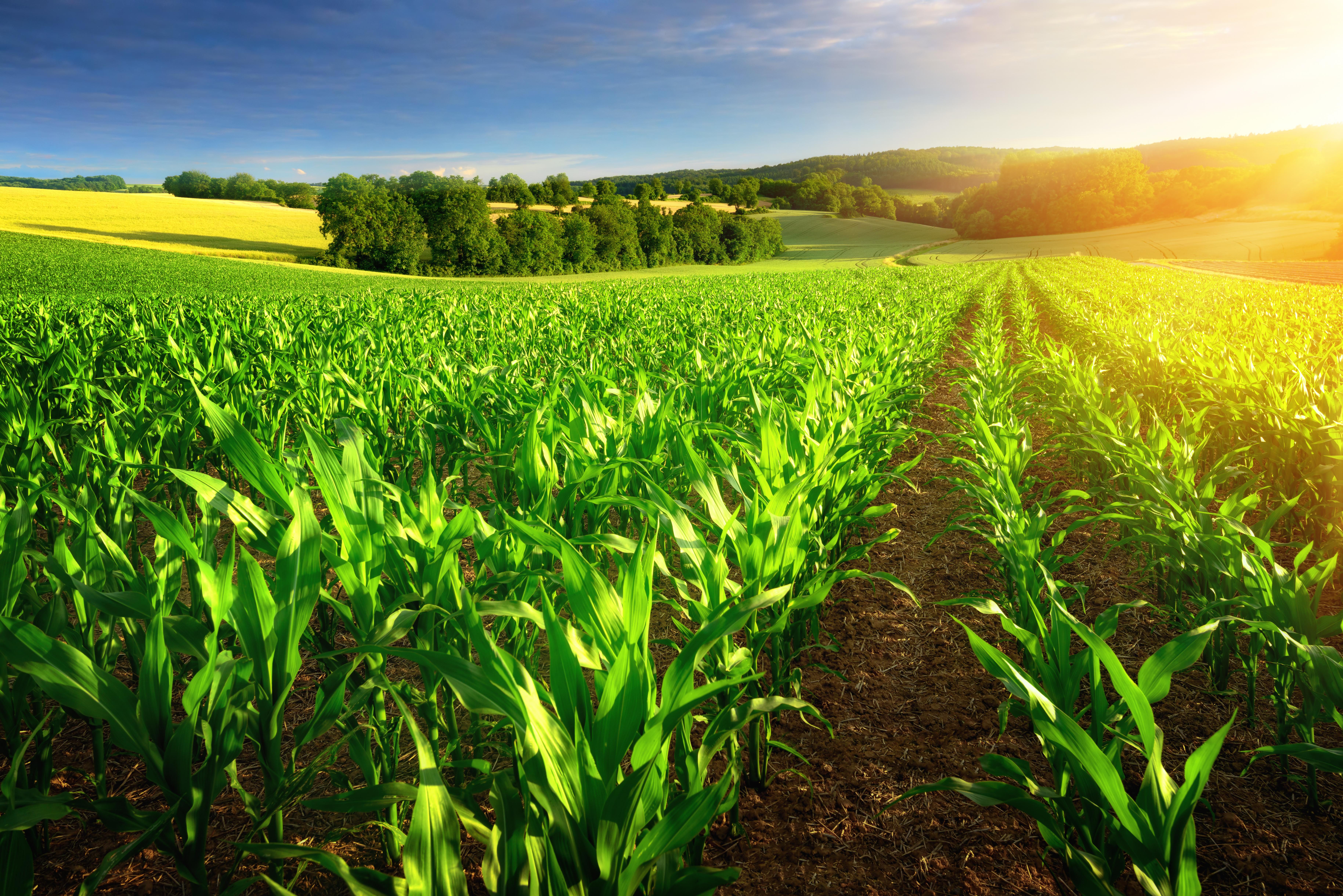 Agrible: Bringing Predictive Analytics to the Farm