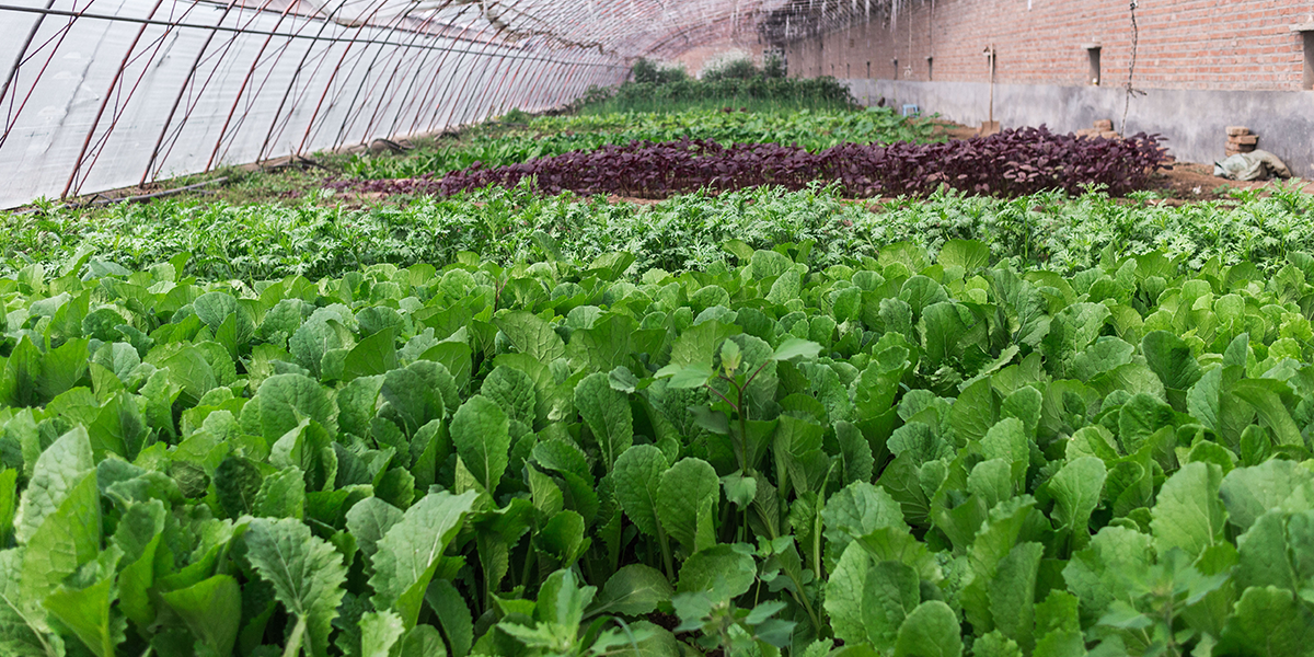 Agrilyst: Developing New Tools to Help Indoor Farmers Thrive