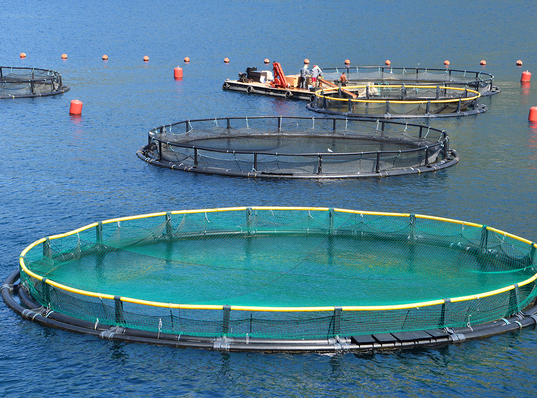 VakSea: Proven Immune-Boosting Proteins for Aquaculture